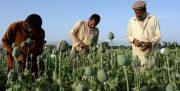 نقش «سیا» در تولید و قاچاق مواد مخدر در افغانستان